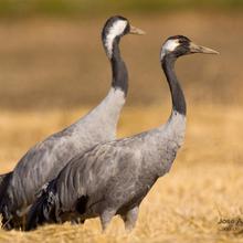 [node:title] | [site:name]8 de mayo: Día Mundial de las Aves Migratorias