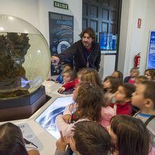 Las mar de cetáceos en Andalucía
