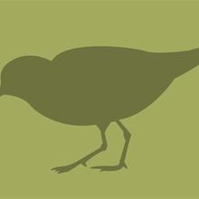 Martes ornitológicos