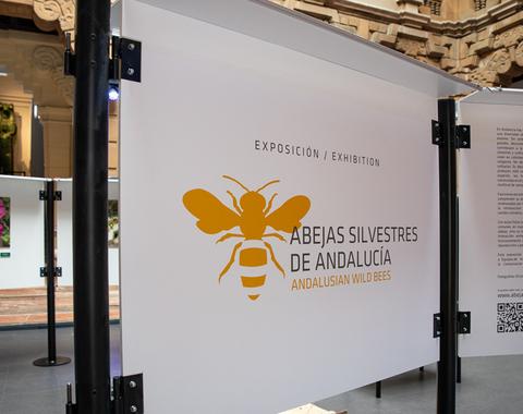 """La exposición """"Abejas silvestres de Andalucía"""" se estrena mañana en la Casa de la Ciencia de Sevilla"""