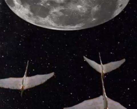 En las alas de la noche