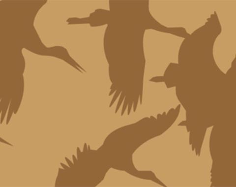 Aves del Entorno de Doñana