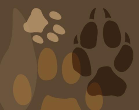 Rastros de animales