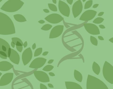 taller El ADN de las plantas
