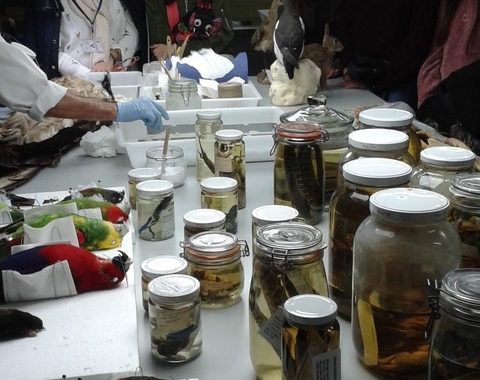 Semana de la Ciencia y Tecnología en Andalucía 1