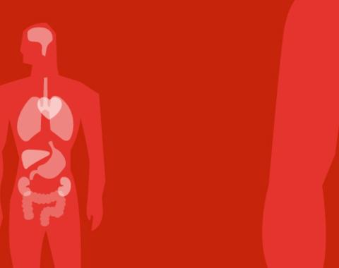 Taller Descubriendo el cuerpo humano