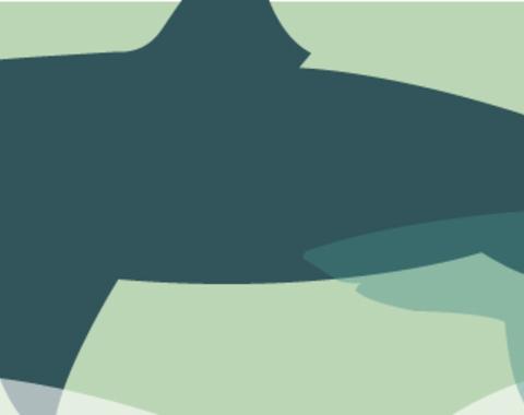 Taller Megalodón, el gran tiburón