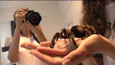 Día Grábiti 8 Arañas