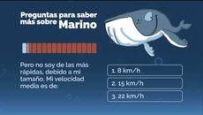 Preguntas sobre Marino