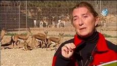 Cría y reintroducción de gacelas desde Almería